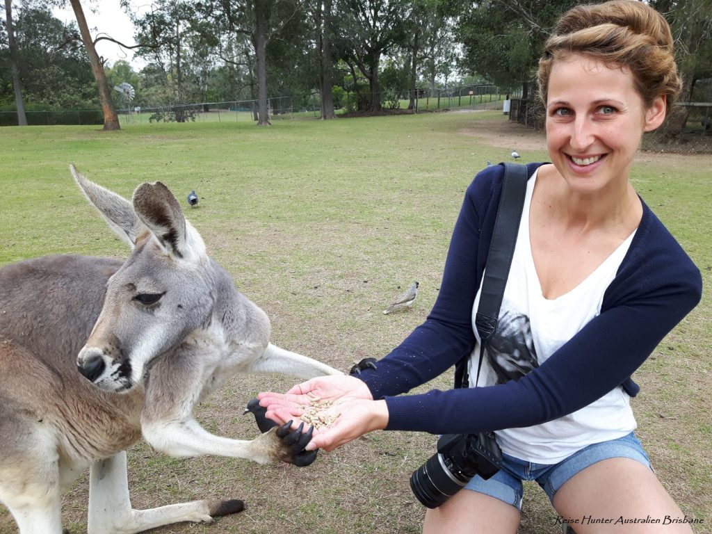Reise Hunter Australien Lone Pine Kängurus3