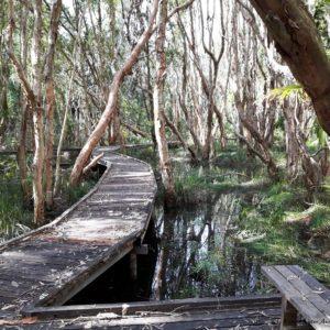 Reise Hunter Australien Byron Bay Holzweg