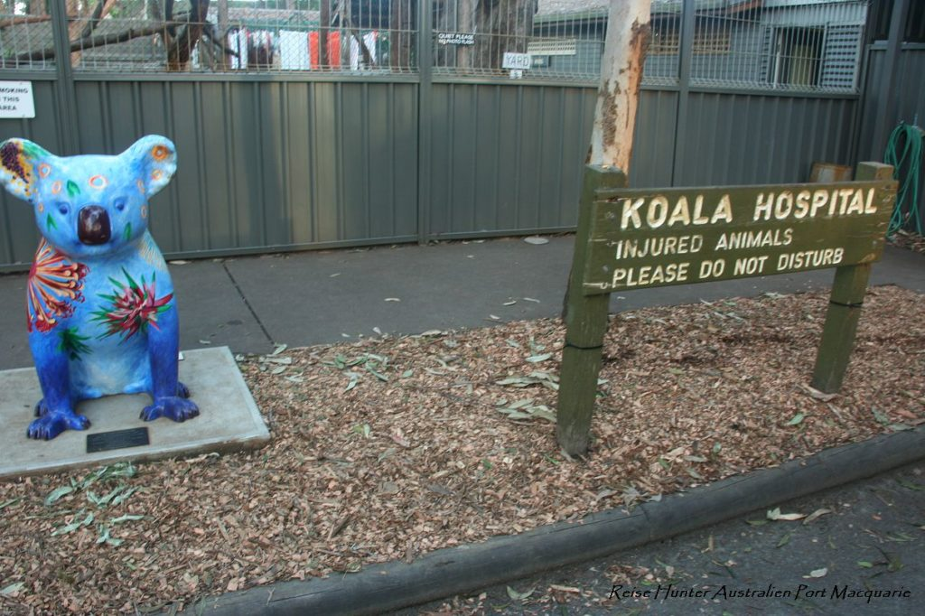 Reise Hunter Australien Port Macquarie Koala Hospital Schild2