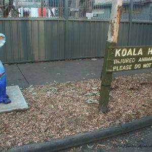 Reise Hunter Australien Port Macquarie Koala Hospital Schild2