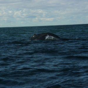 Reise Hunter Australien Port Macquarie Bootstour Wal