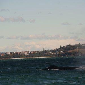 Reise Hunter Australien Port Macquarie Bootstour Wal2