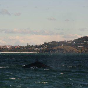 Reise Hunter Australien Port Macquarie Boottour Wal3
