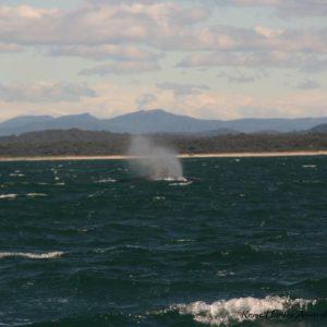 Reise Hunter Australien Port Macquarie Bootstour Wal5