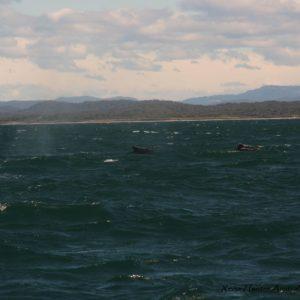 Reise Hunter Australien Port Macquarie Bootstour Wal7
