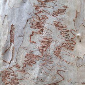 Reise Hunter Australien Baum