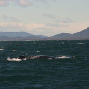 Reise Hunter Australien Port Macquarie Bootstour Wal9