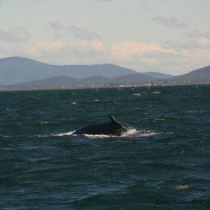Reise Hunter Australien Port Macquarie Bootstour Wal10