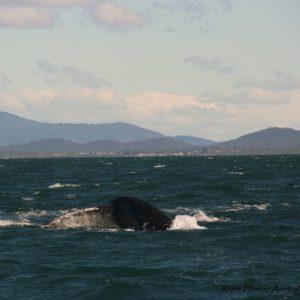 Reise Hunter Australien Port Macquarie Wale7