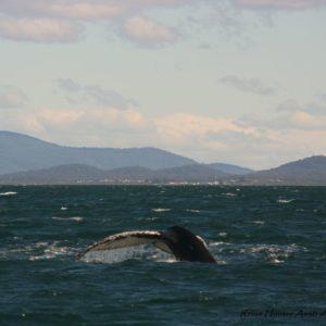 Reise Hunter Australien Port Macquarie Wal6