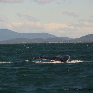 Reise Hunter Australien Port Macquarie Wale4