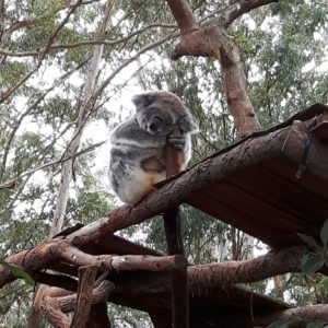 Reise Hunter Australien Port Macquarie Koala Hospital