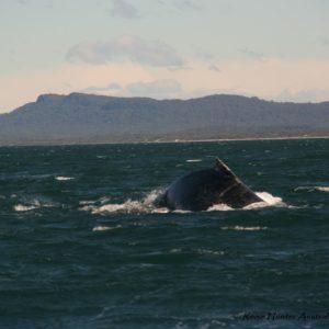 Reise Hunter Australien Port Macquarie Wal2