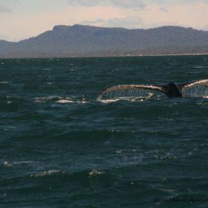 Reise Hunter Australien Port Macquarie Wal