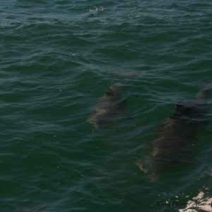 Reise Hunter Australien Port Macquarie Delphine4