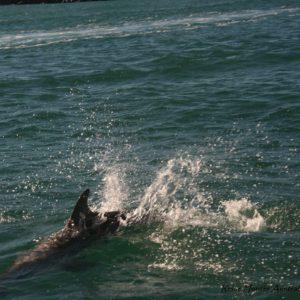 Reise Hunter Australien Port Macquarie Delphine2