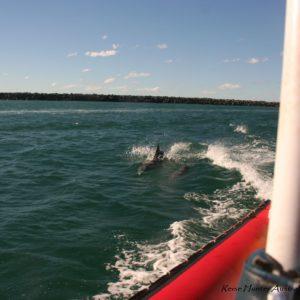 Reise Hunter Australien Port Macquarie Delphine