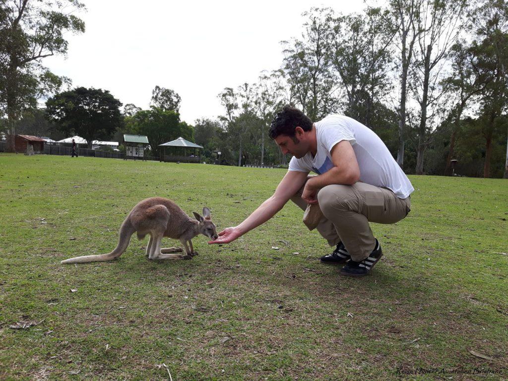 Reise Hunter Australien Lone Pine Kängurus6