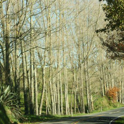 Reise Hunter Neuseeland Natur Bäume