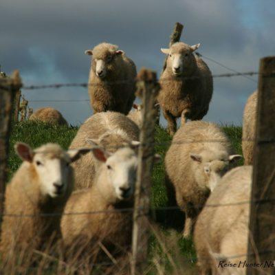 Reise Hunter Neuseeland Nordinsel Bewohner