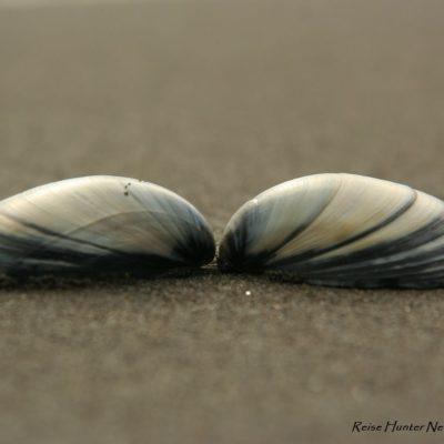Reise Hunter Neuseeland Nordinsel Raglan Strand Muscheln