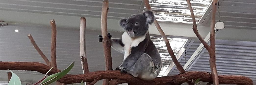 Reise Hunter Australien Brisbane Titel