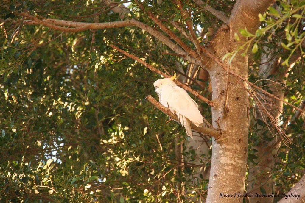 Reise Hunter Australien Sydney Kakadu