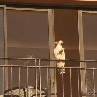 Reise Hunter Australien Sydney Kakadu Balkon 3