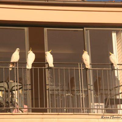 Reise Hunter Australien Sydney Kakadu Balkon
