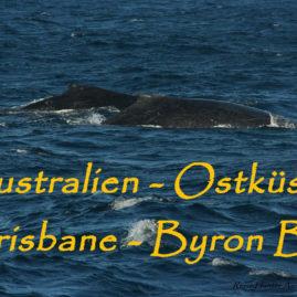 Australien – Kängurus, City Brisbane und Sonne auf dem Pazifik