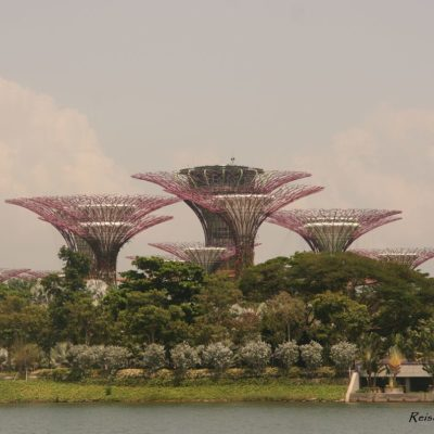 Reise Hunter Singapur Super Trees 2