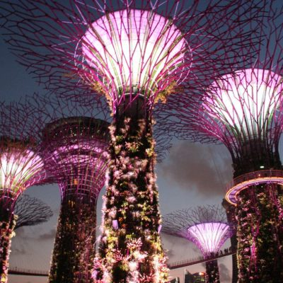 Reise Hunter Singapur Super Trees Show 5