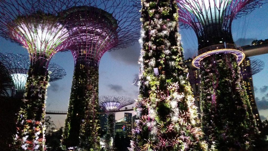 Reise Hunter Singapur Super Trees Show 6