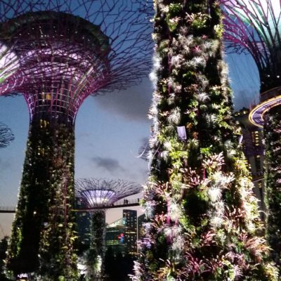´Reise Hunter Singapur Super Trees Show 6