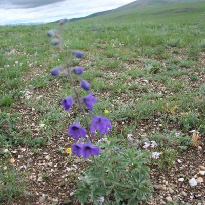 Reise Hunter Mongolei Blume