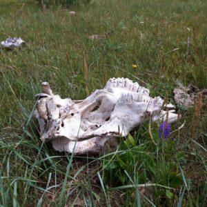 Reise Hunter Mogolei Knochen in der Landschaft