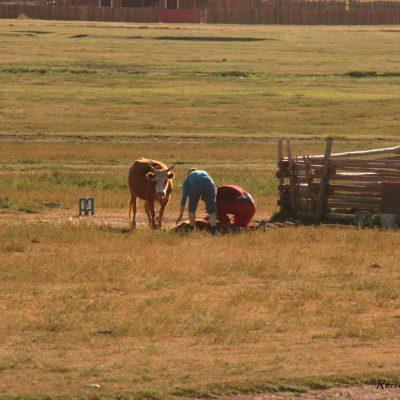 Reise Hunter Mongolei Melkzeit