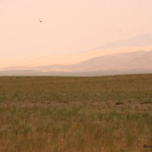 Reise Hunter Mongolei Steppe