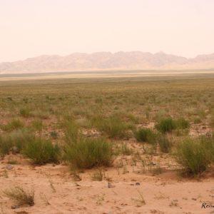 Reise Hunter Mongolei Steppe3