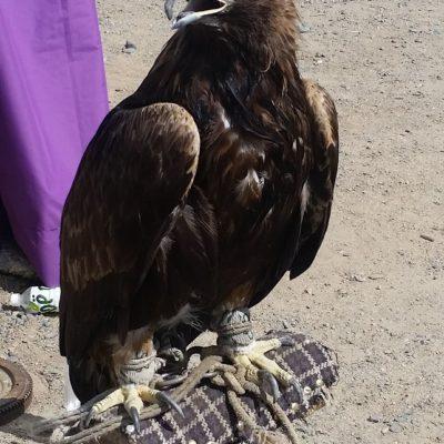 Reise Hunter Mongolei Adler