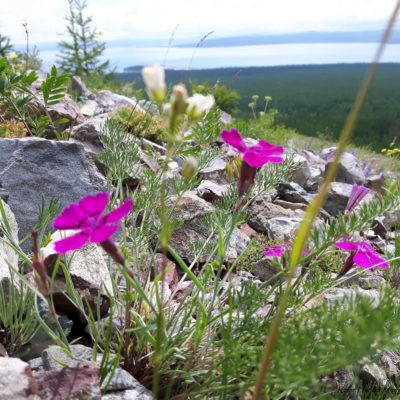 Reise Hunter Mongolei Blumen