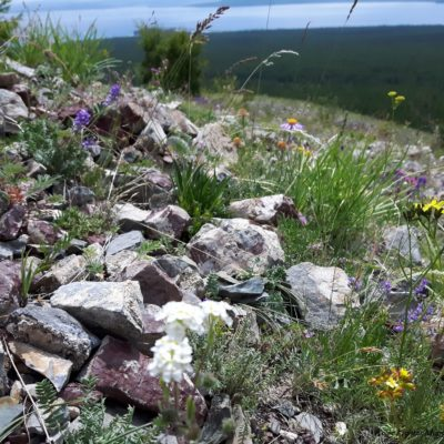 Reise Hunter Mongolei Blumen3