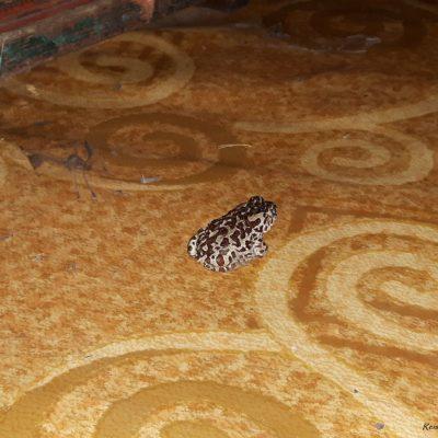 Reise Hunter Mongolei Frosch im Haus