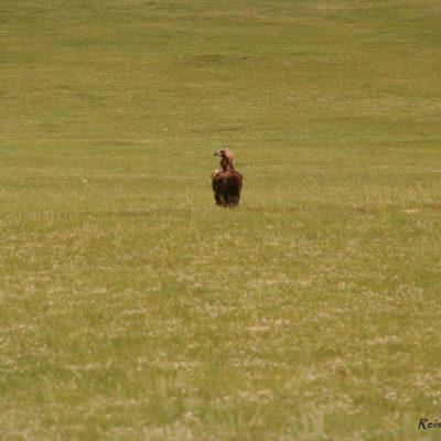 Reise Hunter Mongolei Geier