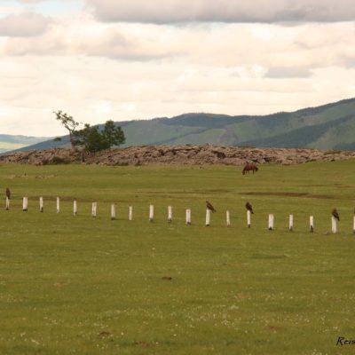 Reise Hunter Mongolei Geier3