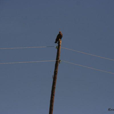 Reise Hunter Mongolei Greifvogel bei der Pause