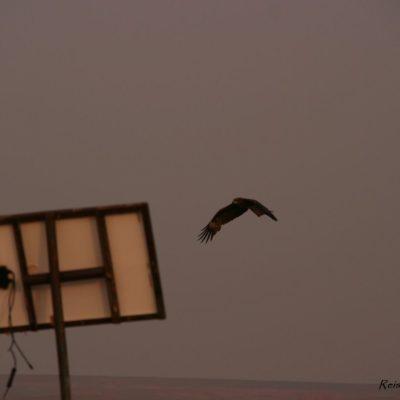 Reise Hunter Mongolei Großer Greifvogel2