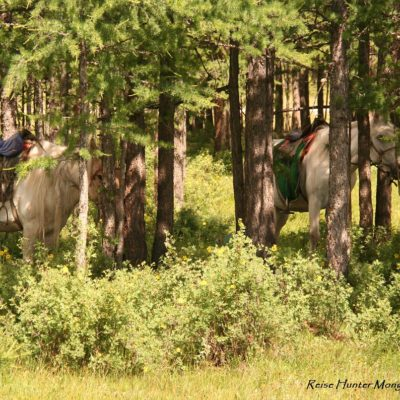 Reise Hunter Mongolei Judihts Pferdetour