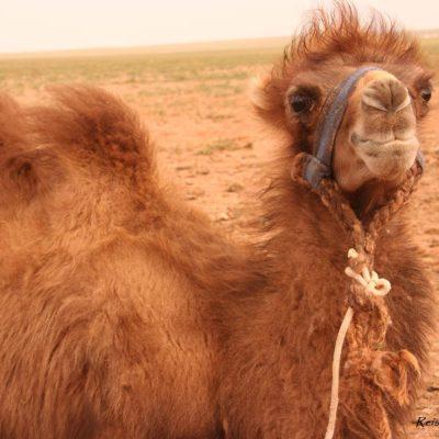 Reise Hunter Mongolei Kamelfrisur