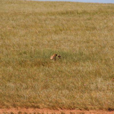 Reise Hunter Mongolei Kleine Nager